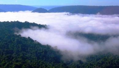 """""""Precisamos conhecer a Floresta Amazônica. Ela é insubstituível para o clima"""", alerta Antonio Nobre"""