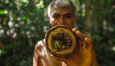 Associações e cooperativas do Norte de Mato Grosso lutam para manter preço da castanha do Brasil após supersafra