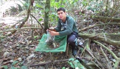 Pesquisa sobre serapilheira na Amazônia Mato-Grossense pode ajudar na preservação da floresta