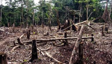 Infoamazônia: contagem de 2015 já tem 90% do desmatamento de 2014 na Amazônia