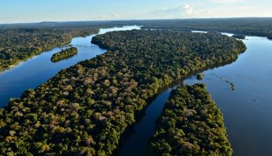 Mercado de carbono no Amazonas: moeda para preservar o meio ambiente