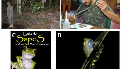 Estudantes da UFMT visitam Fazenda São Nicolau em busca de anfíbios anuros