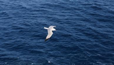 Aquecimento global afetará biodiversidade marinha mesmo dentro da meta
