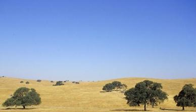 Perda de biodiversidade e funcionamento dos ecossistemas