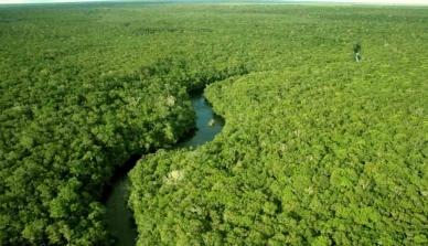 Negociadores alcançam acordo sobre esquema de proteção das florestas