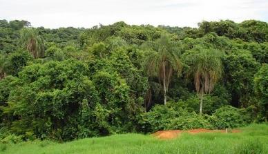 Para a biodiversidade, a floresta é boa inteira e não em pedaços