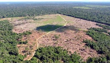 Mato Grosso deve receber R$1 milhão para combate ao desmatamento
