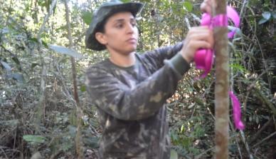 Agrofloresta de Teca contribui para preservação de mamíferos na Amazônia Meridional