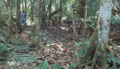 Pesquisa mato-grossense tenta identificar a quantidade de carbono que cada árvore pode sequestrar