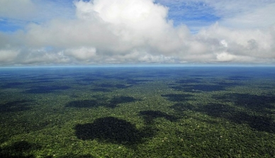 Diversidade faz floresta na Amazônia resistir à mudança do clima