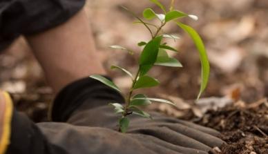 Benefícios do reflorestamento para o produtor rural