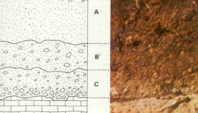 Pesquisadores avaliam a densidade do solo em área de reflorestamento da Fazenda São Nicolau