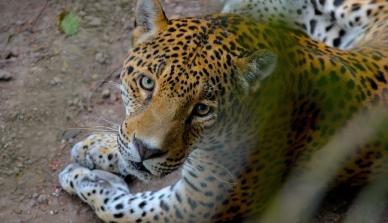 Em 2 anos, Estado resgata 1,4 mil animais silvestres
