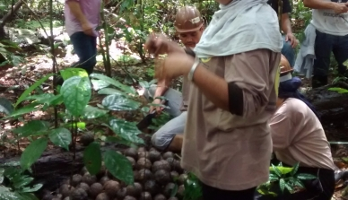 Associação de coletores de castanha-do-Brasil realiza evento em parceria com a ONF Brasil e o ICV