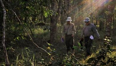 Estudante belga se encanta com a oportunidade de estagiar no coração da Amazônia e participa de pesquisa sobre o reflorestamento com espécies nativas na Fazenda São Nicolau