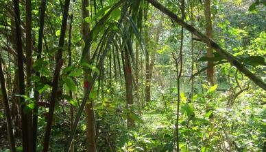 Projeto Poço de Carbono Florestal Peugeot-ONF mede quantidade de carbono estocado nas árvores de reflorestamento da Fazenda São Nicolau