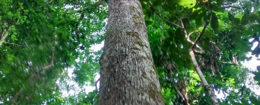 Regularização do extrativismo da castanha-do-Brasil avança no Noroeste de Mato Grosso