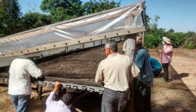 Intercâmbio entre agricultores do Noroeste de Mato Grosso incentiva troca de experiências sobre terreiro suspenso para a pós-colheita do café