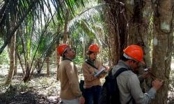 Certificadora visita Fazenda São Nicolau para avaliar absorção de carbono e benefícios do projeto Poço de Carbono Florestal Peugeot-ONF para a comunidade