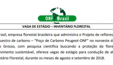 A ONF Brasil lança edital para vaga de estágio