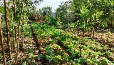 Participação do engenheiro Saulo Thomas no IV Curso Intensivo em Agrofloresta na Fazenda da Toca em São Paulo incentiva o Programa de Integração Local da Fazenda São Nicolau