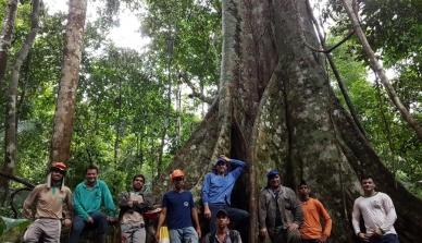 Parcelas permanentes são instaladas na floresta nativa da Fazenda São Nicolau