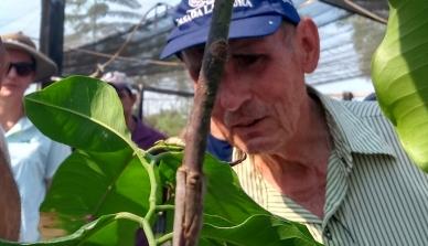 Enxertia em mudas de castanheiras é tema de oficina na Fazenda São Nicolau e pode tornar o plantio de castanheiras atrativo para agricultores