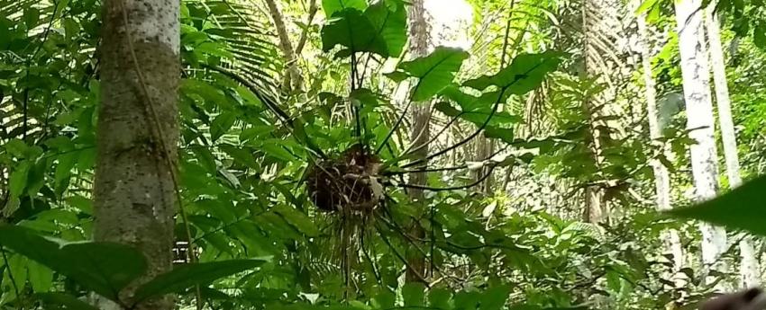 Após 10 anos de pesquisa sobre Jardins-de-formiga na Fazenda São Nicolau, grupo de pesquisadores publica revisão sobre o tema