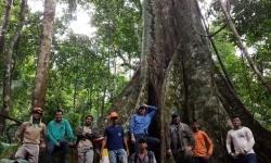 Com o apoio da ciência e da tecnologia, o manejo sustentável da floresta nativa da Fazenda São Nicolau é autorizado pela Secretaria de Meio Ambiente