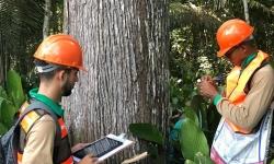 Equipes da ONF Brasil realizam inventário em área de floresta nativa da Fazenda que será manejada em 2021