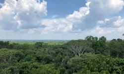 ONF Brasil lança edital: Vaga para assistente técnico e operacional na Fazenda São Nicolau, Cotriguaçu – MT