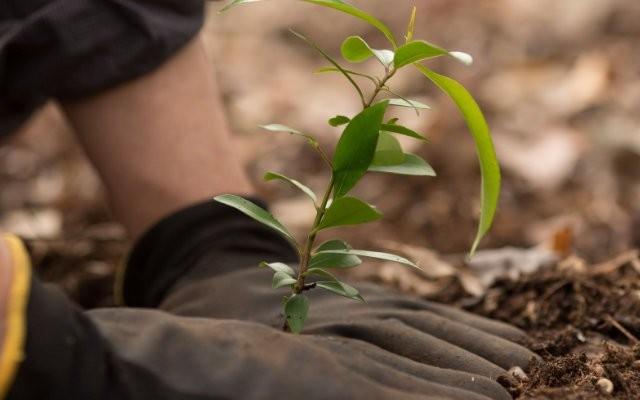 beneficios-do-reflorestamento-para-o-produtor-rural