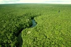 O desmatamento na Amazônia caiu 78% entre 2015 e 2004, ano de início do plano de prevenção (Foto: Divulgação/EBC)