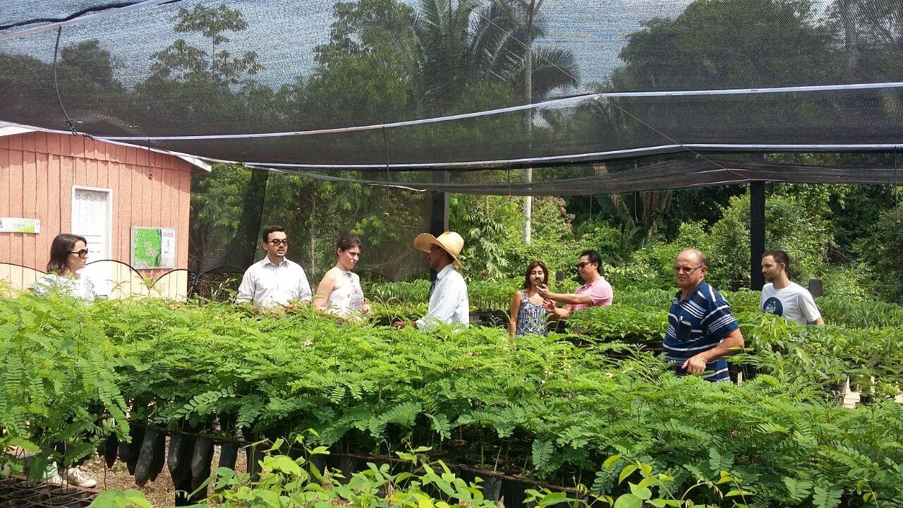 Representantes do poder público visitam o viveiro da Fazenda São Nicolau (Foto: Acervo da ONF)