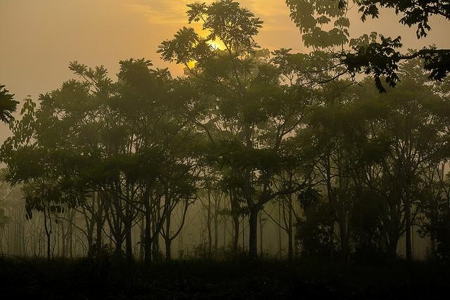 Alguns dos indivíduos utilizados para a revisão da subespécie Deltochilum amazonicum foram encontrados na Fazenda São Nicolau (Foto: Thiago Foresti/ Forest Comunicação/ https://goo.gl/rl2qc7)
