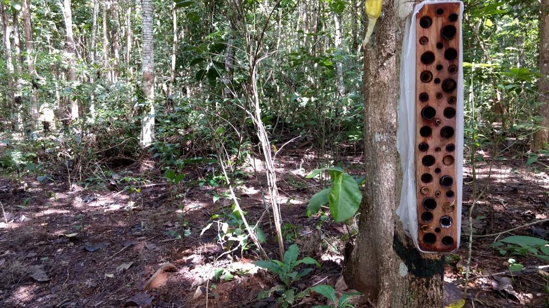 Ninhos-armadilhas instalados na Fazenda São Nicolau (Foto: Gustavo Araújo)