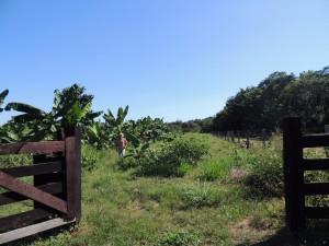 A Fazenda São Nicolau abre as porteiras para a produção de alimento voltado ao consumo interno (Foto: ONF Brasil)