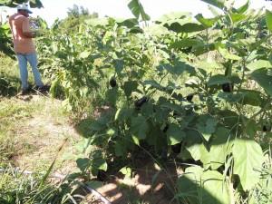 Alimentação na Fazenda São Nicolau (3)