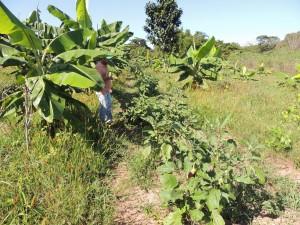 Alimentação na Fazenda São Nicolau (4)