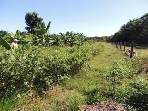 Alimentação na Fazenda São Nicolau (5)