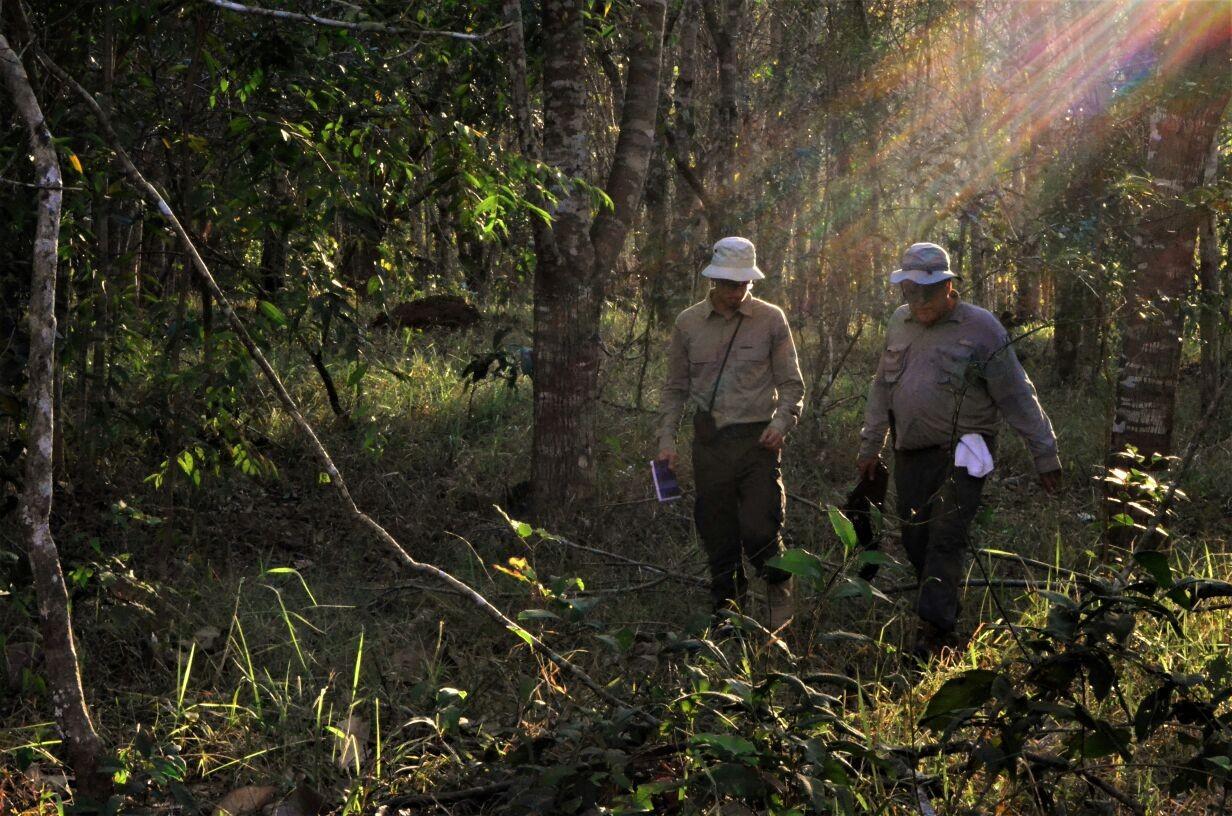 Clément, ao lado do Dr. João Ferraz, caminha pela Fazenda São Nicolau, em território amazônico (Foto: Roberto Silveira)