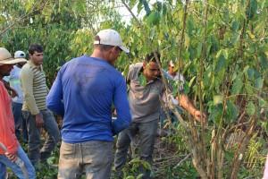 Oficina da ONF Brasil estimula os cafeicultores do Noroeste de Mato Grosso a adotarem práticas agroecológicas 1