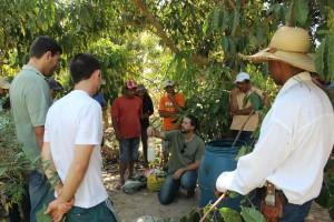 Oficina da ONF Brasil estimula os cafeicultores do Noroeste de Mato Grosso a adotarem práticas agroecológicas 2