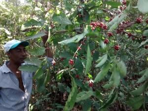Oficina da ONF Brasil estimula os cafeicultores do Noroeste de Mato Grosso a adotarem práticas agroecológicas 6