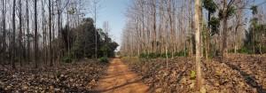 Projeto Poço de Carbono Florestal Peugeot-ONF mede quantidade de carbono estocado nas árvores de reflorestamento da Fazenda São Nicolau 1