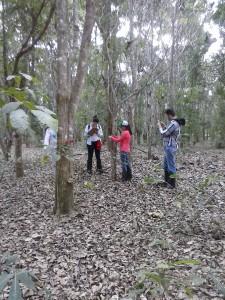 Projeto Poço de Carbono Florestal Peugeot-ONF mede quantidade de carbono estocado nas árvores de reflorestamento da Fazenda São Nicolau 8