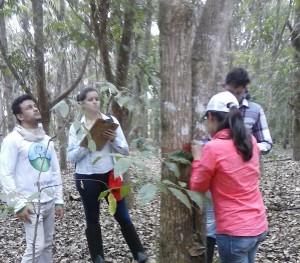 Projeto Poço de Carbono Florestal Peugeot-ONF mede quantidade de carbono estocado nas árvores de reflorestamento da Fazenda São Nicolau 9