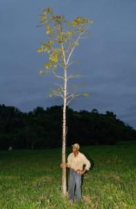 Gilberto e a sua primeira árvore plantada na Fazenda – 2008.