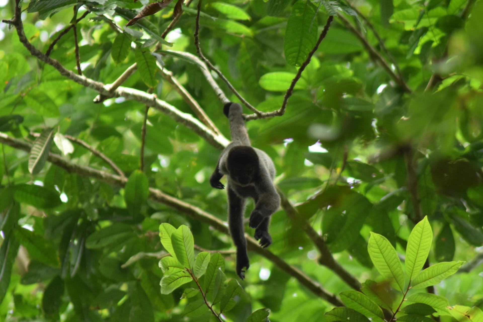 Pesquisadora estuda os hábitos alimentares de primatas na Fazenda São Nicolau (Foto: Raíssa Alves)