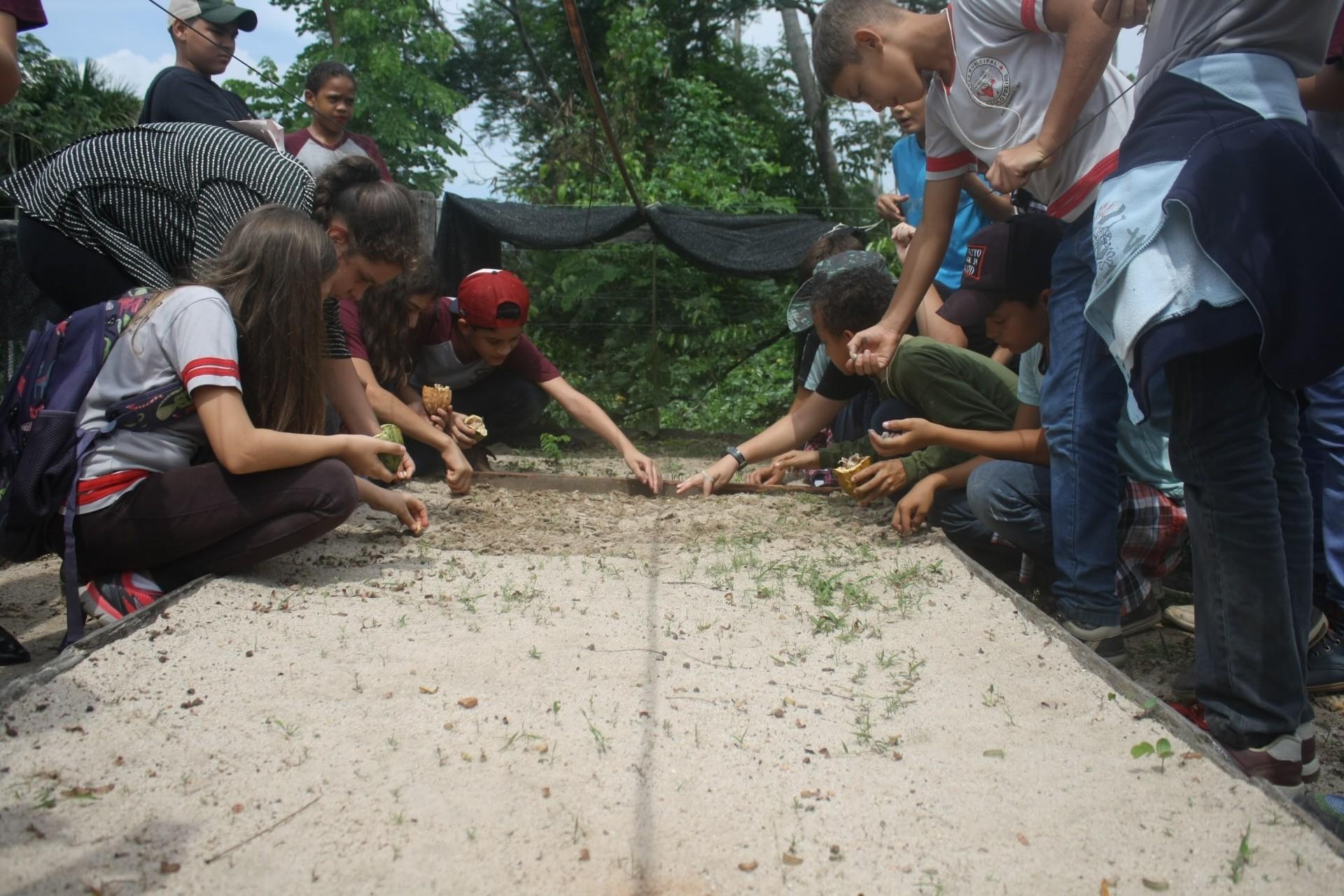 Crianças plantam sementes de cacau nativo no viveiro - Foto de Lótus Reuben